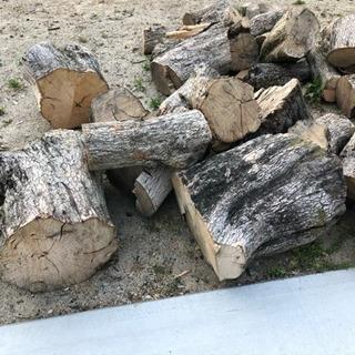 柿の木  薪