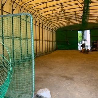 室内練習場、野球!