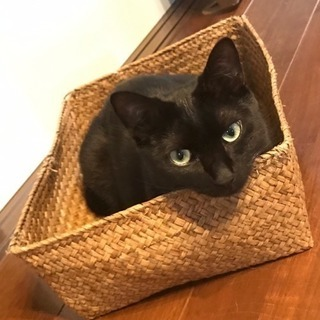 黒猫♂とハチワレ♂の仲良し1才コンビ − 埼玉県