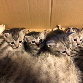 4匹生まれました。残りあと1匹です!