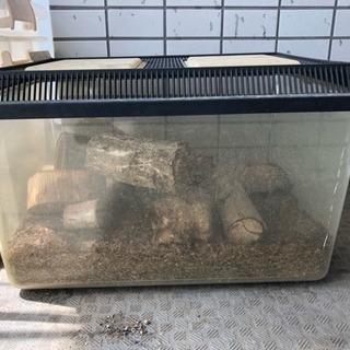 カブト虫 飼育セット