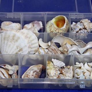 貝殻色々まとめて ビーチコーミング 宿題 工作 アクセサリー 手...