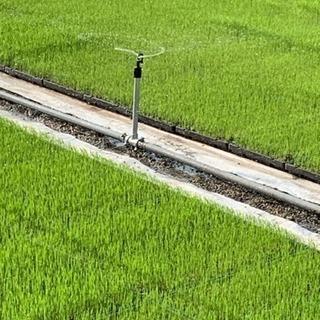 種蒔きから本気で育てた米農家の米