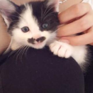 有り難うございましたm(__)m5月18日写真更新!!4/10生まれの子猫2匹里親様募集(^^)♂は里親様決定しました! - 里親募集