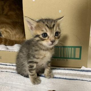子猫3匹の里親募集 一旦募集停止します