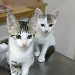 【里親募集】生後約3~4ヶ月の仔猫