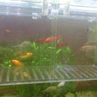 熱帯魚セット(確定)