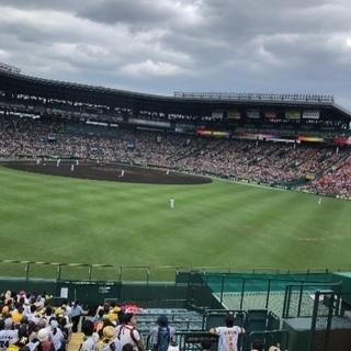 5/21 5月21日 阪神 vs ヤクルト レフト通路近 4枚