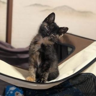 美人で賢いサビ猫です。の画像