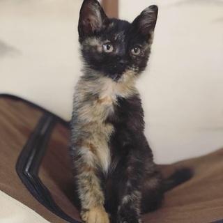 美人で賢いサビ猫です。 - 猫