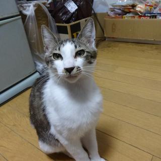 甘えっ子の仔猫です