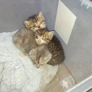 昨日見つけました子猫3匹届け出済みです。