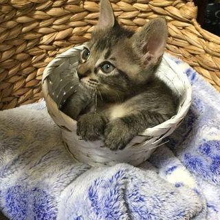 甘えん坊な子猫ちゃん 1ヶ月半