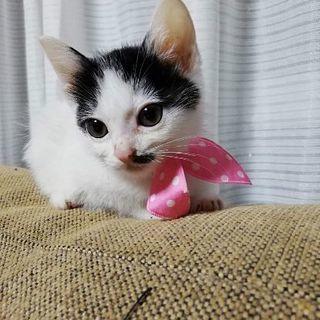 6月2日(日)の猫の譲渡会に出します❤️紅一点 あまみガール 小さ...