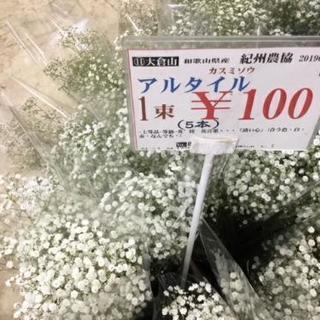 カスミ草100円