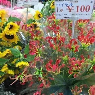 グロリオサ1本100円