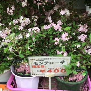 限定品うつぎモンテローザ400円