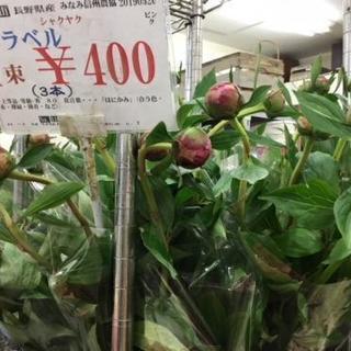 芍薬サラベル400円