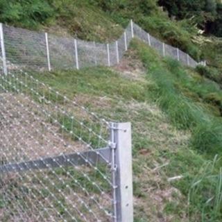 イノシシ・獣害・猪・フェンス・農作物被害・野生動物・豚 - 野田市