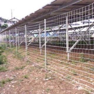 イノシシ・獣害・猪・フェンス・農作物被害・野生動物・豚 - その他