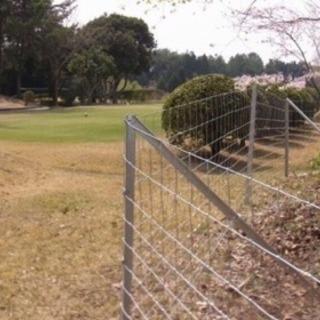 イノシシ・獣害・猪・フェンス・農作物被害・野生動物・豚 − 千葉県