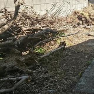 伐採の木材  無料であげます!    ★ 秋冬シーズン! 薪・燃...