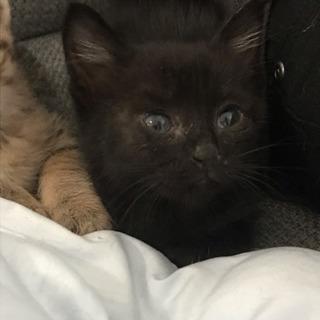 元気いっぱい黒猫のメスです^ ^