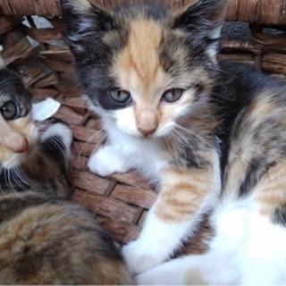 サビ猫さんが3匹産みました