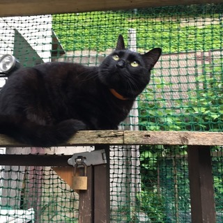 スリスリの黒猫ジン君