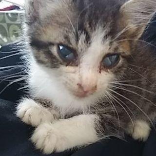 生後3週間くらいの子猫