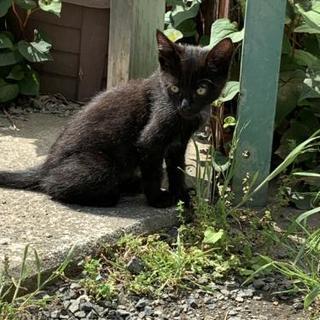 生後2ヶ月半〜4ヶ月半位の野良猫ちゃん