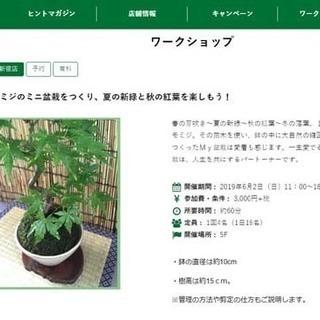 東急ハンズ新宿店で「モミジのミニ盆栽を作つくり、夏の新緑と秋の紅葉...