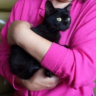 6月2日(日)の譲渡会に出します❤️黒猫女の子生後4ヶ月 …