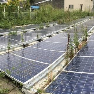 【継続募集】太陽光発電所の草刈(レスポンスの早く責任感のある方 歓...