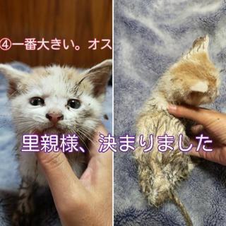 捨てられていた4兄妹。生後1ヶ月半ぐらい。 − 徳島県