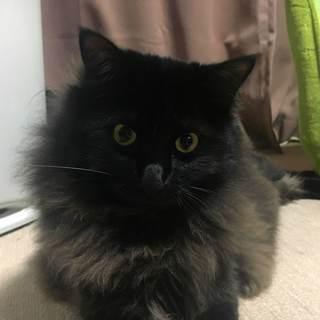 【愛媛県松山市および周辺】猫飼いたい方募集