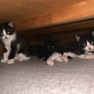 飼い主がいない 子猫3匹