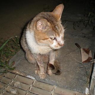 ☆公園にいる高齢の猫を預かってくださいませんか☆虐待され可愛そう...