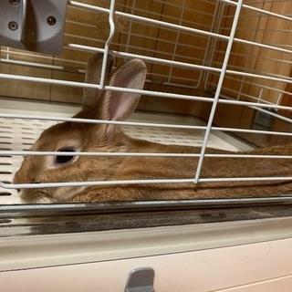 急募!ウサギの里親募集
