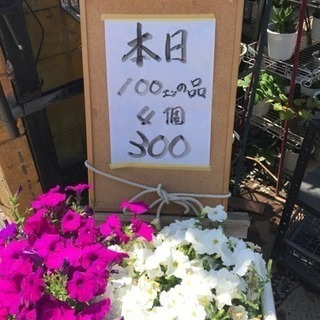 花苗4ポット300円税込