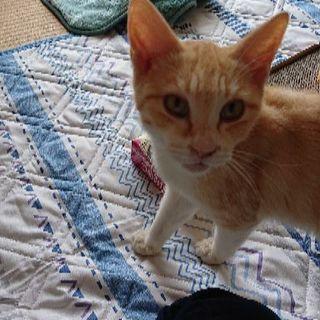 猫エイズ陽性の生後半年くらいの猫さんです