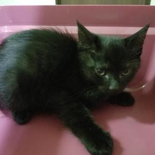 黒猫男子 2ヶ月