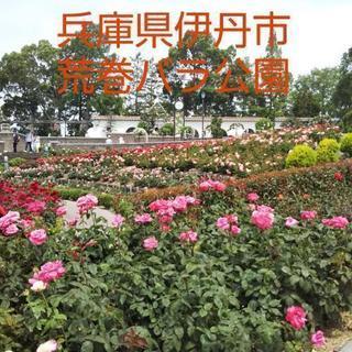 バラの香りに包まれました   荒巻バラ公園、最高でした