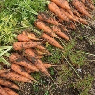 春日井市玉野町でレンタル農園で、野菜を作りませんか?