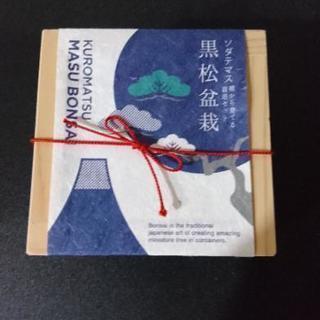 ソダテマス 黒松盆栽