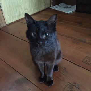 【再募集です!】癒しのスリゴロ黒猫くん♡家族に迎えていただけませんか??