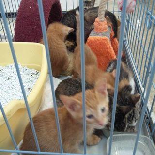 六匹の子猫 (届け出済み。確認済み。)