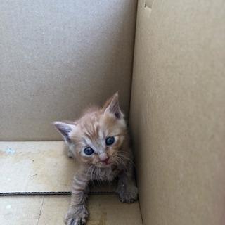 生後1カ月程度の子猫