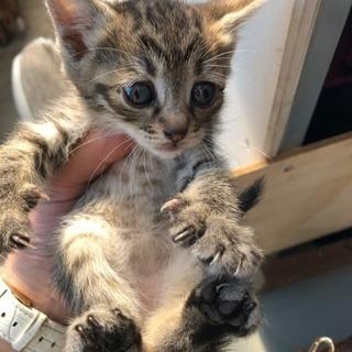 生後2ヶ月の子猫の里親様急募します