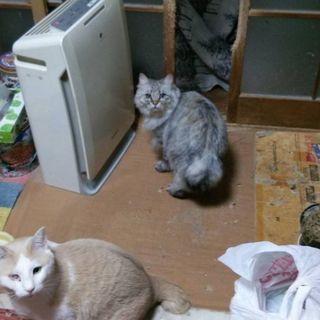 もらって下さい猫ちゃんを
